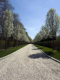 10 best tree lined drive images on tree lined driveway