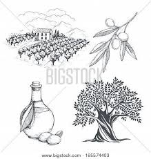 olive branch images illustrations vectors olive branch stock