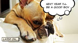 new year s tops your dog s top 10 new year s resolutions for 2015 rover
