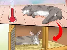 Air Conditioned Rabbit Hutch 4 Ways To Treat Heat Stroke In Rabbits Wikihow
