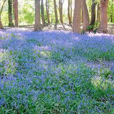 16 best flowers for the garden images on pinterest