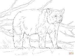 american black bear coloring page kids coloring