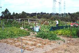 ringwood community garden about