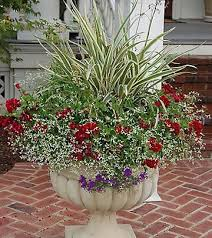 Plant Combination Ideas For Container Gardens - 187 best great container combos images on pinterest flowers