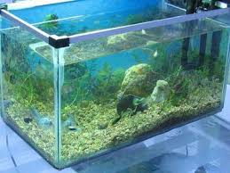 Asian Themed Fish Tank Decorations Ultra Clear Glass Aquarium Ultra Clear Glass Aquarium Suppliers