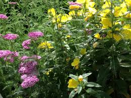garden design garden design with quampa best time to plant