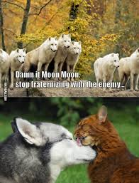 Moon Moon Memes - damn it moon moon moon animal and memes