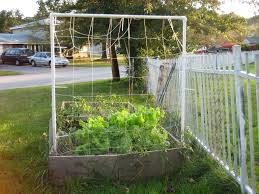 2011 growing season a review suburban self reliance
