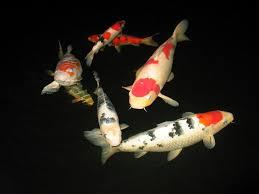 best submersible pond lights pond lights all about koi ponds