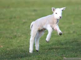 the meaning and symbolism of the word lamb