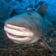 my shark attack was the best thing that ever happened to me new