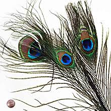 peacock ribbon peacock feather ribbon shop with ribbons