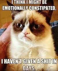 Cat Memes Tumblr - hilarious cat memes tumblr image memes at relatably com
