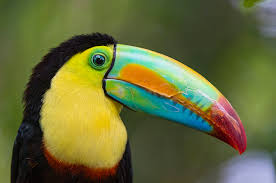 19 of the world 39 s most colorful birds nature babamail