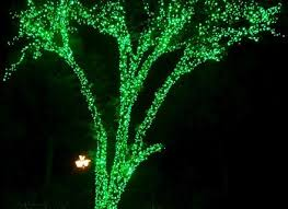 compare prices on white christmas tree lights green wire online