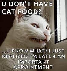 Morpheus Cat Meme - throw back thursday cat memes i can has cheezburger funny
