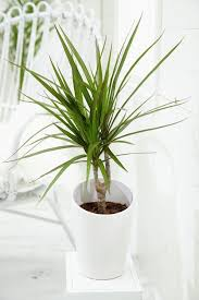 easy flowers to grow indoors u2013 a useful guide for indoor gardening