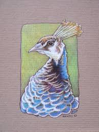 how to draw peacocks drawing tutorials u0026 drawing u0026 how to draw