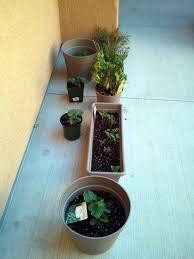 growing vegetable indoors made easy indoor plants expert