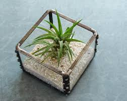 small terrarium with air plant geometric planter glass