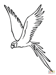 parakeet fly coloring page free printable coloring pages