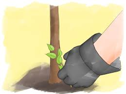 how to prune lilacs 9 steps with pictures wikihow