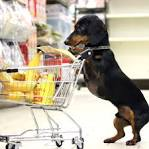 Image result for dachshund cooking photos