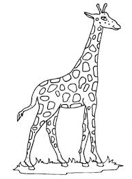 coloring pages animals giraffe coloring pages realistic