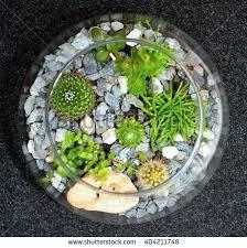 indoor succulent stock billeder royaltyfri billeder og vektorer