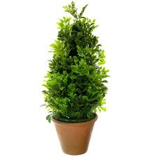 Herb Topiaries Find The Topiary Boxwood Cone By Ashland At Michaels