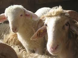 chambre d agriculture 64 cas types ovins lait des pyrenees atlantiques