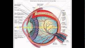 Picture Of Eye Anatomy Images Of Human Eye Structure Youtube
