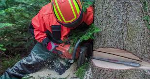 a is slicing a tree trunk with a chainsaw he is going to cut