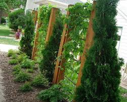 Screen Ideas For Backyard Privacy 66 Best Privacy Fences Images On Pinterest Backyard Ideas