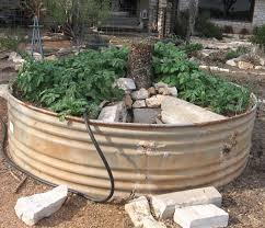 organicgreendoctor keyhole garden and tomatoes