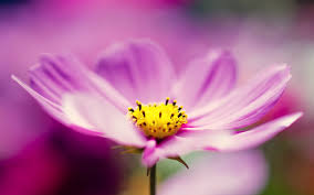 wallpapers tagged with flower flower hd wallpapers page 3