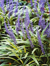 10 Best Perennials And Flowers by The 10 Best Perennials For Shade