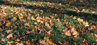 falling into place fall tasks to get your garden ready for winter