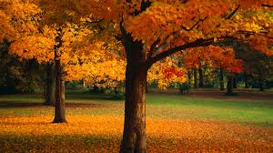 Beautiful Images Wondrous Pictures Of Beautiful Trees Safety Equipment Us