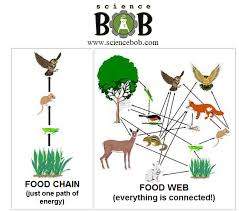 what travels through a food chain or web images What is the difference between food chain and food web quora