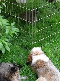 just a pup tibby bunnies and green