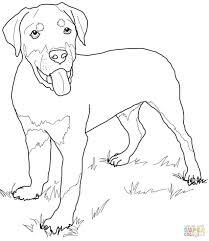 coloring pages adults corgi puppy dog corgi