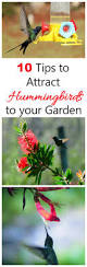 attract hummingbirds to your garden in 10 easy steps