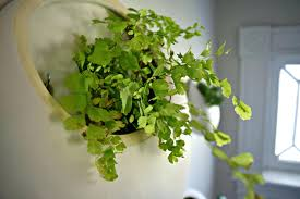 living wall planter living wall planters australia living wall