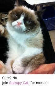 Cute No Meme - cute no join grumpy cat for more cats meme on esmemes com