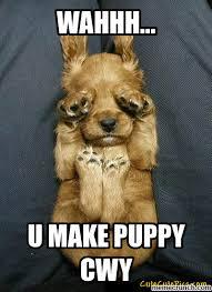 Puppy Face Meme - make puppy sad