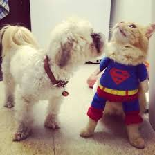 pictures of funny animals pictures of cute animals in costumes