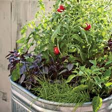 single container vegetable garden sunset