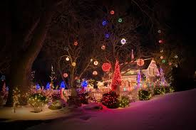 picture christmas new year tree snow night time fairy lights bush