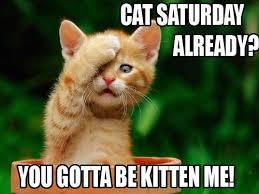 Happy Cat-urday! Cat Saturday!